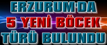 Erzurum'da 5 Yeni Böcek Türü Keşfedildi