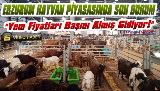 Erzurum Hayvan Fiyatlarında Son Durum