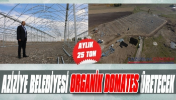 Aziziye Belediyesi Organik Domates Üretecek