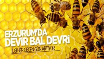 Erzurum'da Devir Bal Devri!