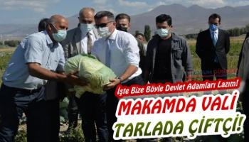 Erzurum'da Lahana Hasadı Yapıldı